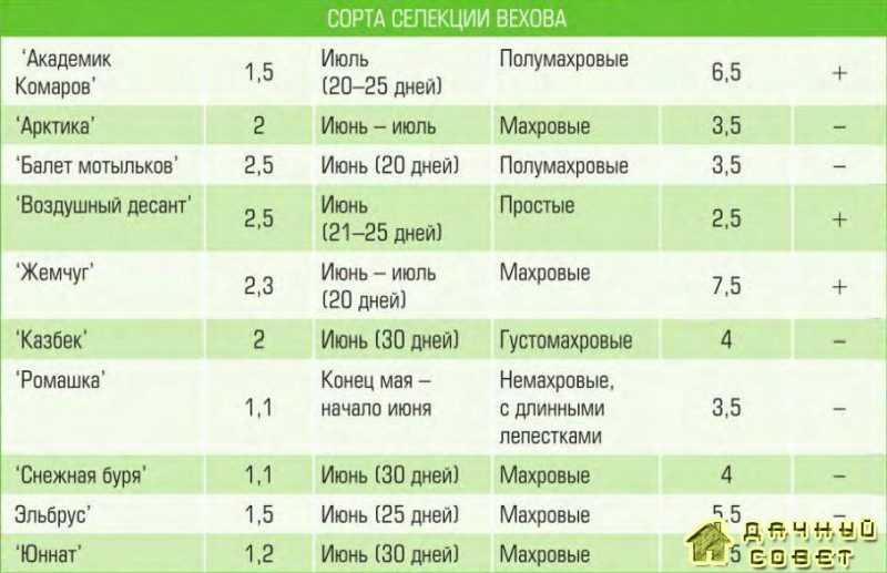 Уход за жасмином садовым (чебушник) 2