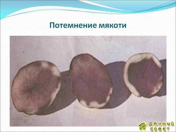 Потемнение мякоти картофеля