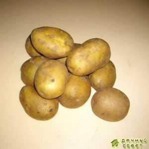 Сорт картофеля 'Лукьяновский'