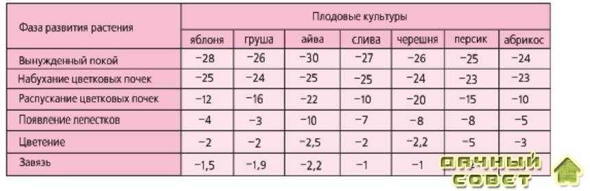 критическая минимальная температура плодовых культур по фазам развития,°С