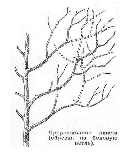 Обрезка и формирование плодовых деревьев 1