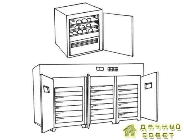 Инкубаторы: домашний и промышленный