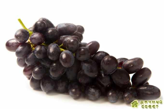 """Сорт винограда """"Молдавский черный"""""""