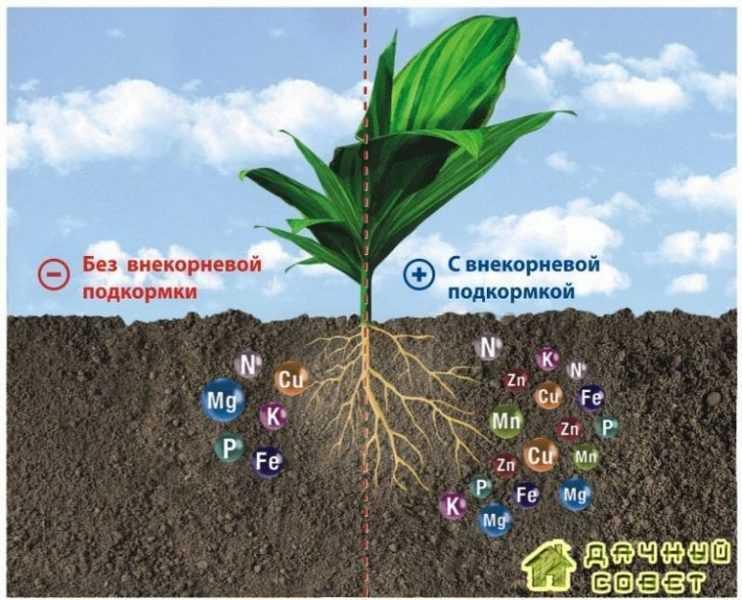 Биологические потребности растений в плодовом саду