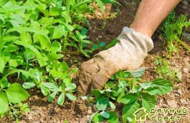 Как избавится от сорняков