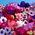 Как правильно подкармливать цветы,для ярких красок и пышного цветения