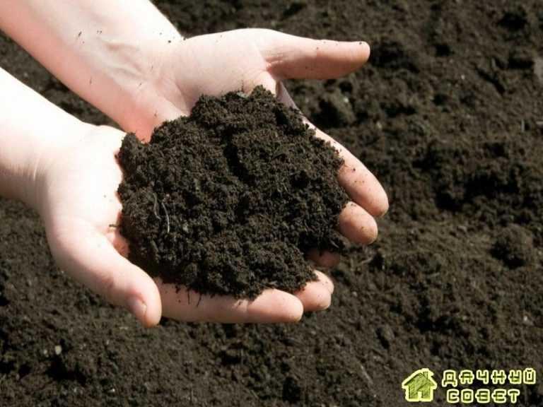 Как провести предварительную обработку почвы на новом участке