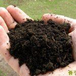 Какие химические элементы необходимы для жизни растений
