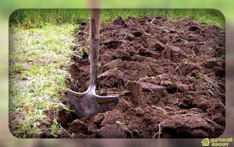 Обработка почвы для посадки картофеля