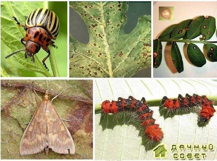 Общие сведения о вредителях и возбудителях болезней растений