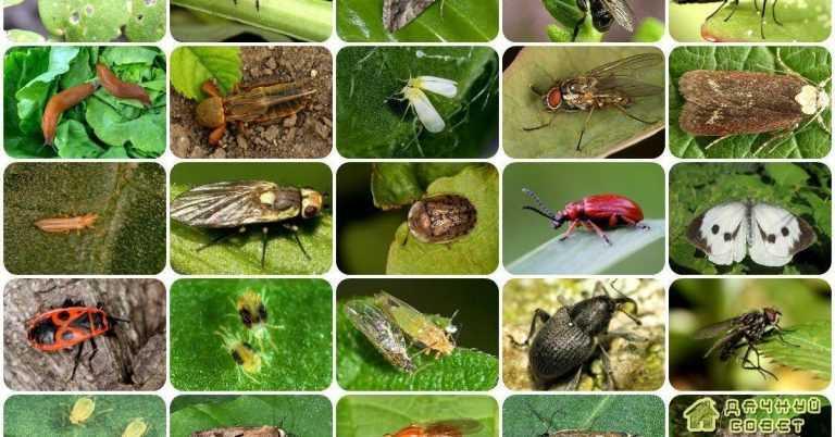 Огородные вредители и борьба с ними (с фото)