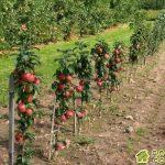 Особенности выращивания садовых культур