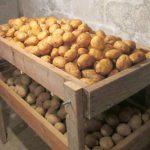 Отбор и подготовка семенного материала к хранению