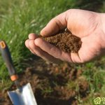 Почва для картофеля.Общая характеристика