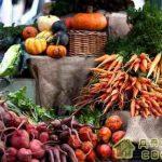 Правильное хранение урожая