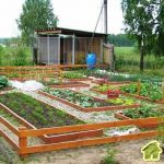 Правильное размещение овощных культур на участке
