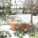 Уход за садом и растениями зимой