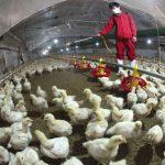 Виды и объекты дезинфекции в птицеводстве