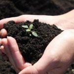 Востанавливаем плодородие почвы