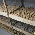 Закладка на хранение картофеля