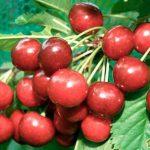 Биологические особенности плодовых растений