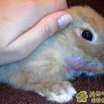 Инфекционный стоматит у кроликов