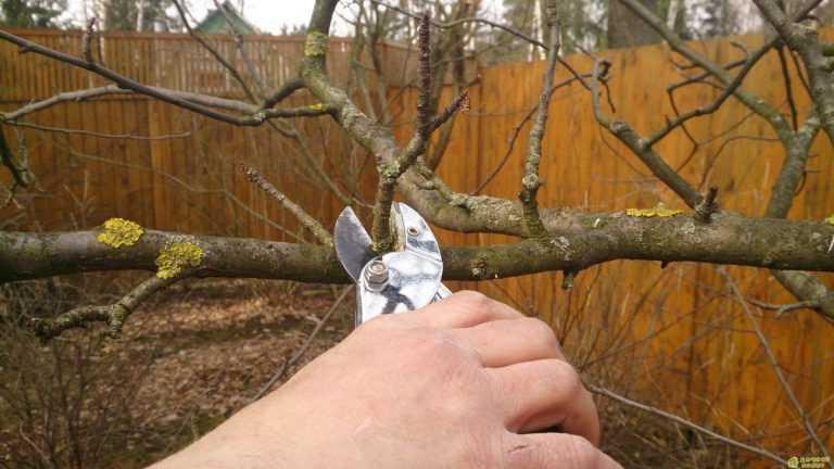 Обрезка и формирование плодовых деревьев