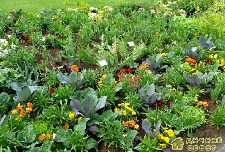 Растения отпугивающие вредителей на огороде
