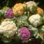 Цветная капуста от посева до урожая.Уход.Подкормки