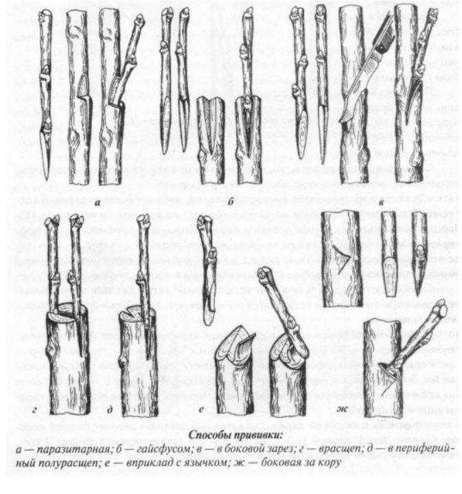 Прививка и обрезка деревьев и кустарников 3