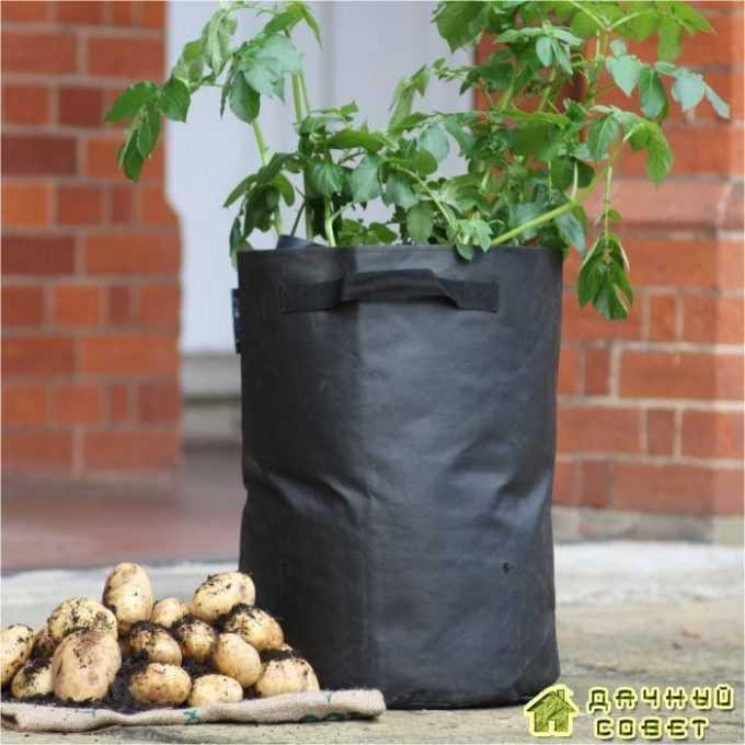 Посадка картофеля в бочках