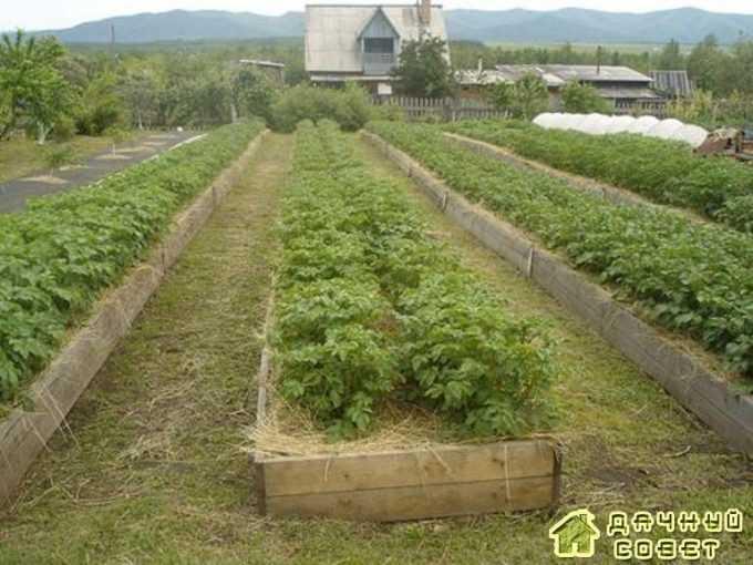 Посадка картофеля в коробах на органике