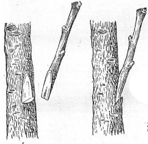 Копулировка в приклад сбоку1 — с оставлением шипа в простой приклад;2 — с отставлнием шипа в приклад с зарезом внизу