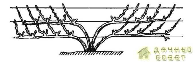 Многорукавная 2-ярусная форма