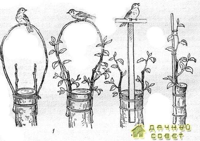 Предохранение прививок от полома ветром и птицами1 — дуги; 2 — перекладина; 3 — колышек