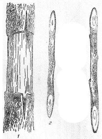 Прививка за кору мостиком