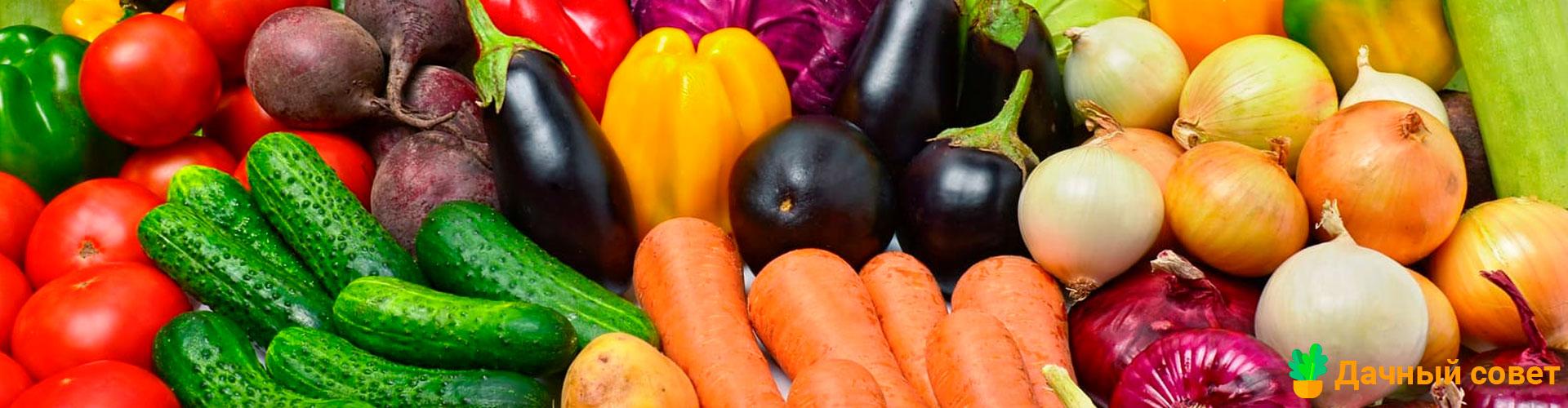 Когда и чем удобрять овощи. Шпаргалка для огородника