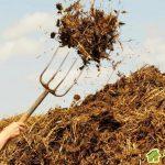 Как правильно использовать навоз на садовом участке
