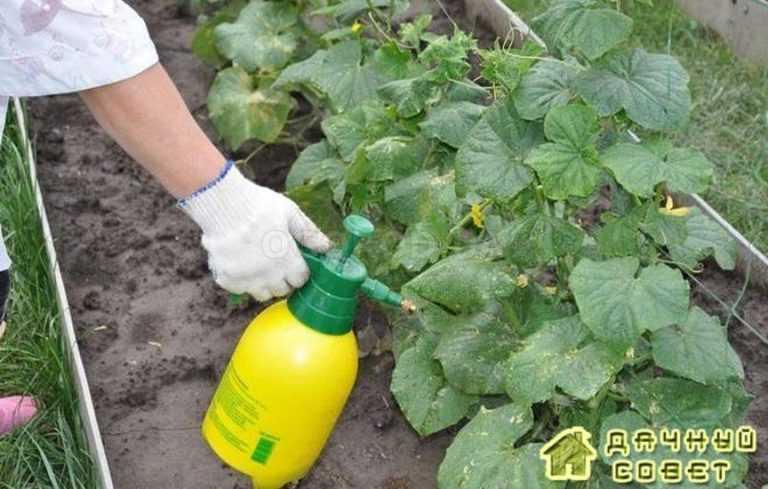 Как правильно подкармливать овощи