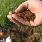 Какие почвы пригодны для выращивания садовых культур