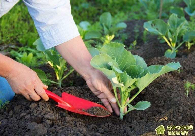 Особенности ухода за растениями