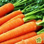 Особенности выращивания моркови