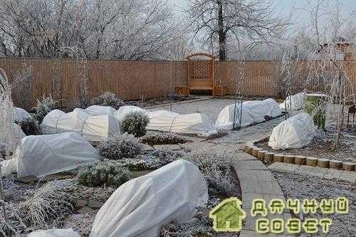Подготавливаем свой сад к зиме