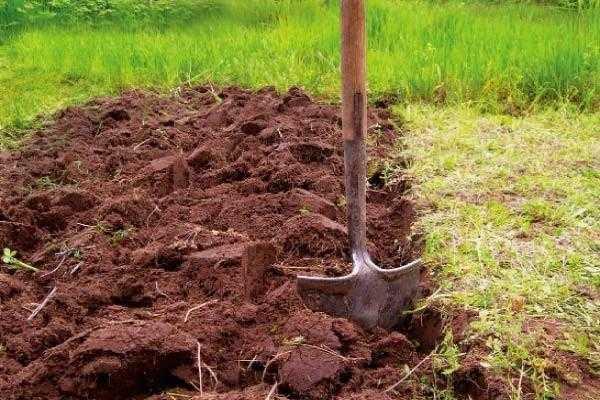 Подготовка почвы — дело благородное!