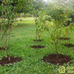 Посадка кустов и деревьев на садовом участке