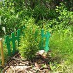 Посадка растений в саду,без ошибок