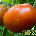 Новые сорта томатов 2