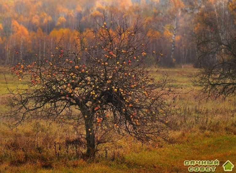 Уход за садом и растениями осенью
