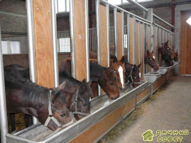 Коневодство.Разведение и выращивание лошадей