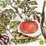 Kpaткиe cвeдения o вpeдителяx и болезнях растений